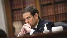 El senador Rubio advierte de la creciente desinformación antes de las elecciones del 3 de noviembre