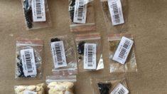 Investigación del USDA revela 14 variedades de semillas no solicitadas enviadas desde China