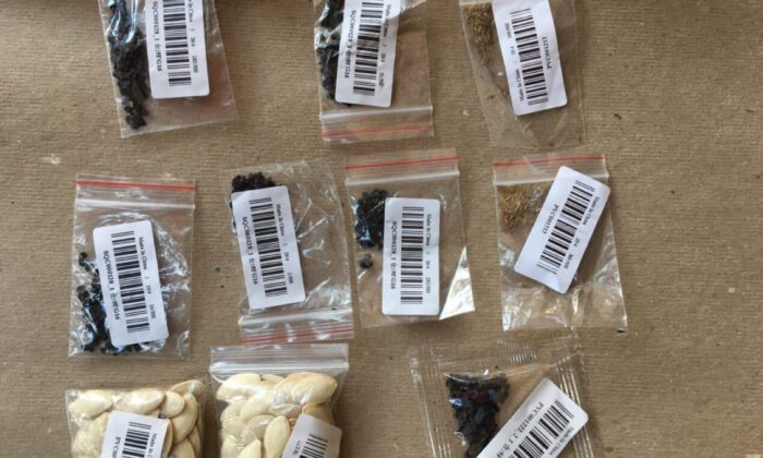 Paquetes de semillas que una residente de Nueva York recibió en un paquete de correo de China. (Proporcionado a The Epoch Times)