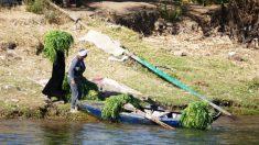Vea la vida pasar por el río Nilo en Egipto