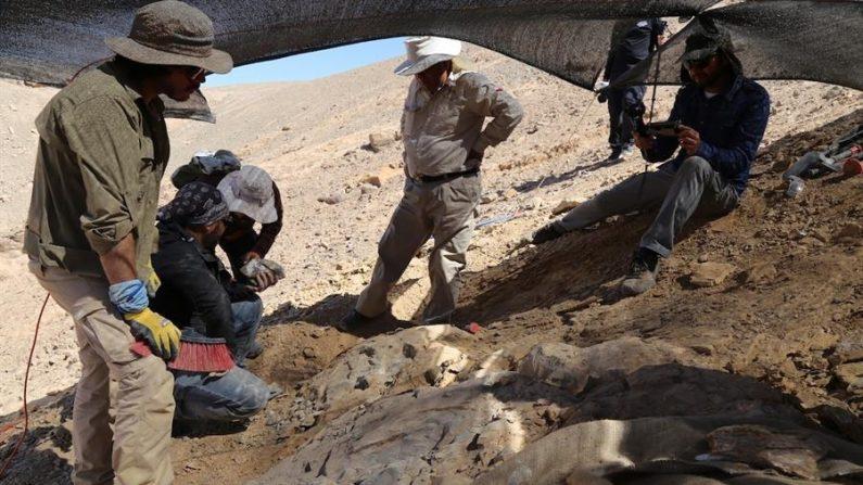 Fotografía cedida el 23 de septiembre de 2020 por Mauricio Castro Barraza que muestra a expertos mientras recuperan los restos de un depredador marino del Jurásico, en el desierto de Atacama (Chile). EFE/ Cortesía Mauricio Castro Barraza