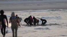 Surfista australiano muere después del ataque de un tiburón en la popular playa de Gold Coast