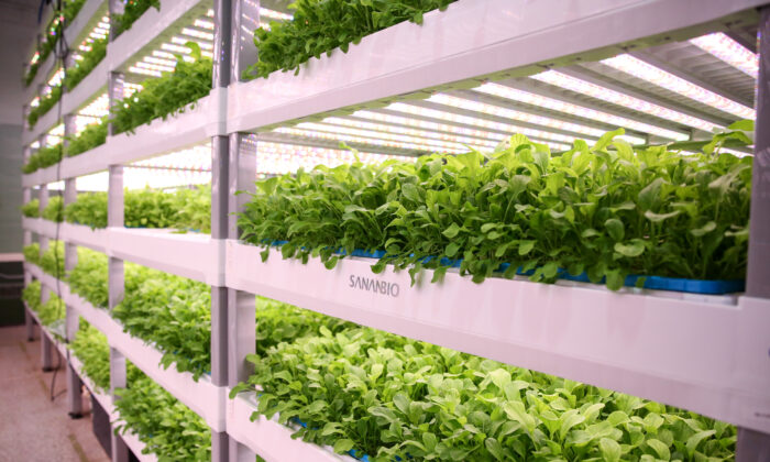 Jardín hidropónico vertical en la granja Second Chances en Wilmington, Del., el 14 de septiembre de 2020. (Charlotte Cuthbertson/The Epoch Times)