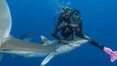 """Buceadora retira anzuelo de pesca atorado en la boca de un tiburón: """"Es una sensación asombrosa"""""""