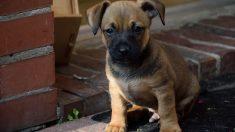 """Cachorro queda """"vestido y alborotado"""" para su adopción, pero una familia colombiana le da un hogar"""