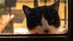 """Mujer cartera comparte sus graciosos encuentros con una gatita que la """"ataca"""" al entregar el correo"""