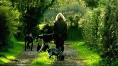 """Caravana de animales sigue a una mujer caminando por las calles: """"Pensé que era un mago"""""""