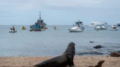 """Barcos chinos """"saquearon"""" calamares de Galápagos, representando el 99% de actividad pesquera: estudio"""