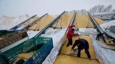 """¿Por qué Beijing, Tianjin y Hebei firmaron un """"acuerdo de ayuda mutua para la seguridad alimentaria""""?"""