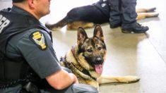 Niño de 10 años de Ohio recauda más de USD 315,000 para entregar chalecos antibalas a perros policía