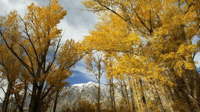Los colores del otoño llenan los árboles en Round Valley el 19 de noviembre de 2003 en las montañas del este de la Sierra Nevada cerca de Bishop, California. (David McNew/Getty Images)