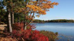 El mejor Leaf-Peep de Estados Unidos: los 5 mejores lugares para disfrutar del esplendor del otoño