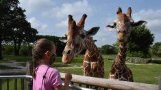 Zoológico de Miami ofrece visita privada a niña con cáncer que pidió un deseo