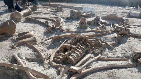 Encuentran más de 200 restos de mamuts en zona de construcción de nuevo aeropuerto en México