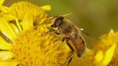 Adolescentes crean corredores florales para que las abejas polinicen y sobrevivan en su ciudad