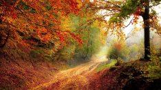 Planificando un viaje por carretera: Buscando los colores del otoño