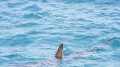 Mujer embarazada salva a su marido del ataque de un tiburón que se aferraba a su hombro