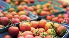 Agricultor francés dona a su comunidad 30 toneladas de tomates que no pudo vender por la pandemia