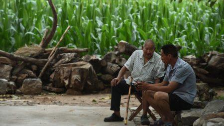 China enfrenta a una probable escasez de maíz después de los desastres naturales del verano