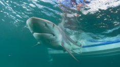 Miami Beach registra su primer ataque de tiburón del año