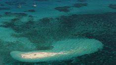 Descubren un arrecife de coral en Australia más alto que el edificio Empire State
