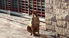 Perrita espera afuera de la tienda de su dueña que murió, aguardando su regreso