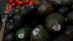 México y Estados Unidos renuevan alianza por la inocuidad alimentaria