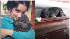Perrito se emociona al visitar la tumba de su dueña fallecida hace 4 años: es amor incondicional
