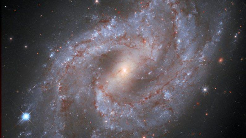 Esta imagen del Hubble de la galaxia NGC 2525 muestra una supernova brillante hacia la parte inferior izquierda de la galaxia. Durante casi un año, se desvaneció. (Cortesía del Space Telescope Science Institute/STScI/ESA/Hubble & NASA, A. Riess et all)
