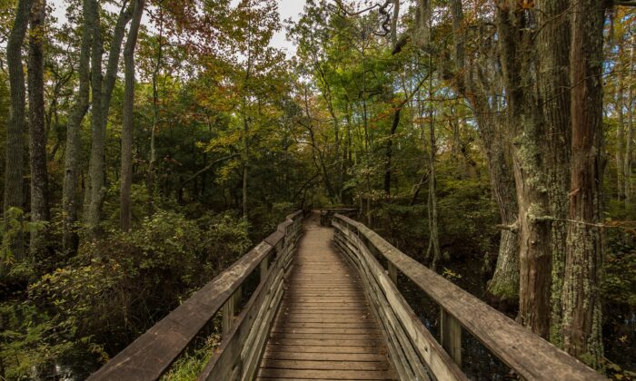 El parque estatal de First Landing,Virginia. (Cortesía de la Oficina de Convenciones y Visitantes de Virginia Beach)