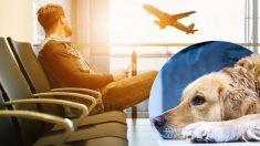 Mexicano queda varado en Perú más de 20 días tras negarle a su perro abordar vuelo de repatriación