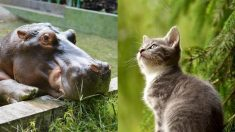 Gatos y perros de refugio conocen a leones e hipopótamos en una visita al zoológico en plena pandemia