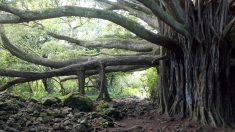 El arte del árbol de Bodhi conduce a una mejor salud mental