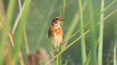 Encuentran rara ave mitad hembra y mitad macho que deja en vilo a los científicos