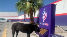 """Grupo gasolinero mexicano inaugura """"estaciones perronas"""" para dar comida y agua a perritos callejeros"""
