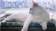"""Gata """"genéticamente diferente"""" y con necesidades especiales de Nueva York es una estrella en Instagram"""
