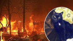 Encuentran gatito perdido en incendio que destruyó la casa de sus dueños hace dos años