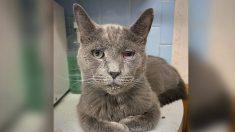 """Rescatan 161 gatos en estado crítico y encuentran otros 49 muertos en """"refugio de mascotas"""" de Ohio"""