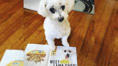 """Sobreviviente de un criadero de cachorros es elegida como """"el perro de rescate más bonito del mundo"""""""