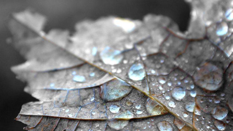 A medida que la temperatura desciende, el rocío persiste y comienza a congelarse, dando a este término solar. (Pxhere/CCO)