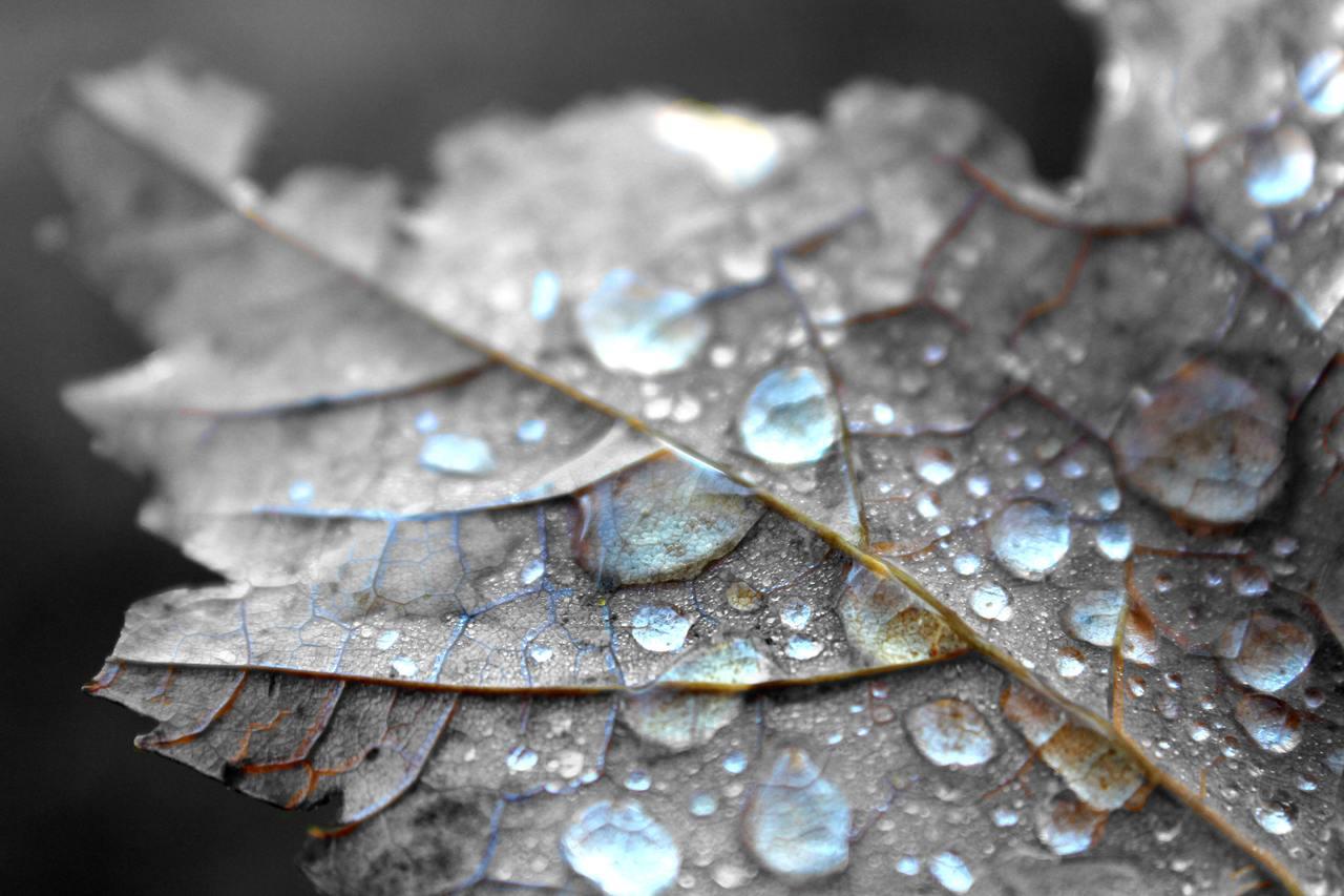 Mientras el otoño se enfría, busca las alturas y reflexiona con humildad