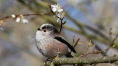Aves majestuosas: cada una de ellas es la más bella de su especie