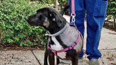 Hombre visto golpeando a una perrita en un video viral, entrega a sus mascotas a un hogar adoptivo