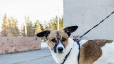 Niño se las ingenia para proteger a su perro del sol en México: su amor y creatividad son indiscutibles