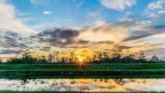 Un viaje a los Parques Nacionales de Florida