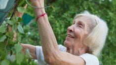 Las experiencias de la vida ayudan a los adultos mayores a recuperarse del trauma pandémico