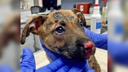 Rescatan a cachorro con quemaduras graves después de que le prendieran fuego en una caja de plástico
