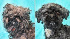 """""""Concurso de perros sucios"""" saca el mejor brillo a los perros de refugios y los ayuda a ser adoptados"""