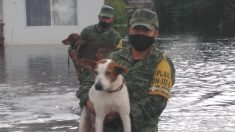 Militares del ejército mexicano salvan a 20 perros en una inundación: su familia no quería abandonarlos