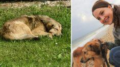 Fundación ayuda a reunir a soldado con el perro callejero que la ayudó cuando estaba desplegada en el extranjero